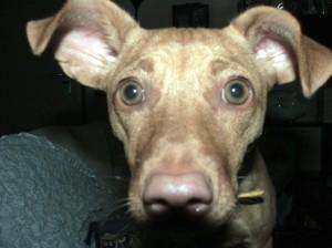 La mia cagnolina Birra